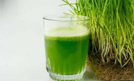 Sok z trawy pszenicznej – naturalny lek na wiele dolegliwości