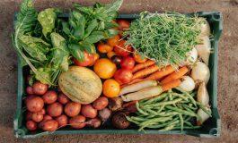 Składniki odżywcze, których nie uzyskamy z produktów pochodzenia zwierzęcego
