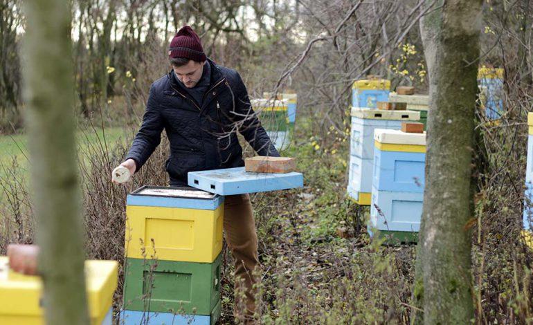 Co to jest dobry miód, czyli widziane okiem pszczelarza
