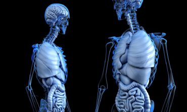 Czy współczesna dieta na stałe zniszczyła nasze zdrowie?