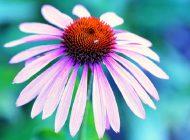 10 ziół wzmacniających układ odpornościowy
