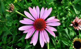 Leki kwiatowe złagodzą twój stres