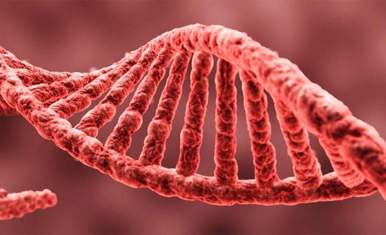 DNA żywności modyfikowanej (GMO) przenika w całości do ludzkich organizmów