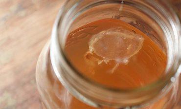 Grzybek japoński (herbaciany) - scoby i kombucha