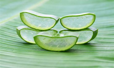 Aloes – rzecz o wszechstronnym działaniu
