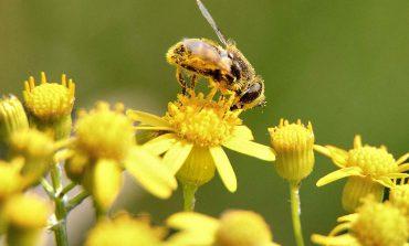 Dlaczego warto jeść pyłek kwiatowy?
