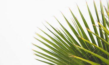 Rośliny doniczkowe wzmacniające odporność i poprawiające jakość snu
