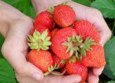 9 zdrowych pokarmów, które wydają się niejadalne + ich właściwości zdrowotne