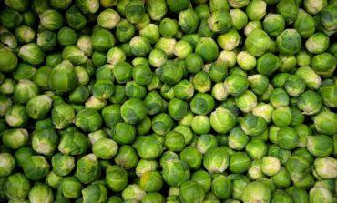Moc roślin: jak salvestrol zwalcza raka