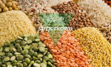 Korzyści z jedzenia roślin strączkowych