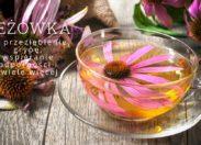 8 potwierdzonych naukowo zastosowań jeżówki (na przeziębienia, grypę, wspieranie odporności i nie tylko)