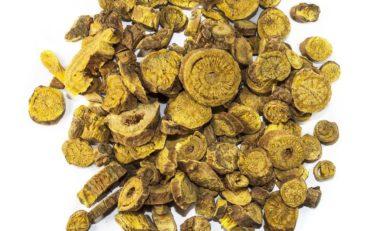 Tarczyca bajkalska - mało popularne zioło na alergie, nowotwory i cukrzycę