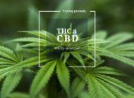 CBD, THC - warto znać te pojęcia. Zobacz historię Pana Marka